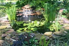 31 Build Beautiful Above Ground Pond with Simple Design - More DIY Ideas Above Ground Pond, Garden Design, Pool Water Features, Pond Design, Water Garden, Backyard Garden, Ponds Backyard, Outdoor Gardens, Outdoor Plants