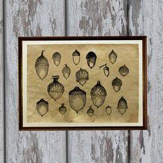 Oak nuts print Natural history art Acorns illustration by artkurka, $18.00