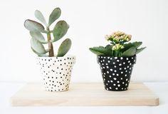 Fick mig att tänka på Kooola Kaktusen och Pillemariske Pelargonen!