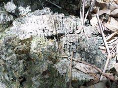 Coral prehistorico