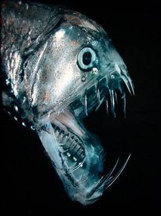 another cutie from the deep sea - Viperfish in Marianas Trench is the deepest part of the ocean in the Pacific Ocean. Beautiful Sea Creatures, Deep Sea Creatures, Weird Creatures, Deep Sea Animals, Under The Water, River Monsters, Sea Monsters, Underwater Creatures, Underwater Life