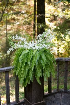 White dendrobium orchids nestled on a Boston fern and placed on a rustic stand.