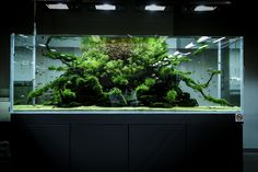 https://flic.kr/p/istANA | ADA Nature Aquarium Gallery | Beautiful moments of the gallery a few months earlier. Breathtaking nature aquariums, top of the line maintenance, awesome plant health. Managing a planted aquarium is not easy, now think about it, how much work needed for 40 aquascape, where some of them are really huge ones! ADA Team did an unbelievable amount of work with the gallery aquariums and was an inspirational visit for all of us. I can't be enough appreciate for the visit…