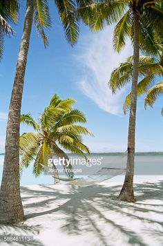 Stock Photo : Palm trees with hammock on sandy beach