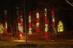 A view of the Peppermint Forest in Lost Hollow during Holidays at the Garden 2014 at Daniel Stowe Botanical Garden