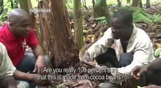 African Cocoa Farmers Taste Chocolate For The First Time