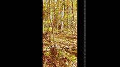 Displaying thumbnail of video Hunting the Farm 2016.mp4