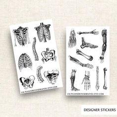Anatomy Vintage Sticker Set Planner Stickers Journal Stickers Stationary Sticker Body Bones Skull Skeletons Brains Hearts 258 by Planner Stickers, Journal Stickers, Scrapbook Stickers, Travelers Notebook, Filofax, Vintage Sticker, Body Bones, Sticker Organization, Student Planner Printable