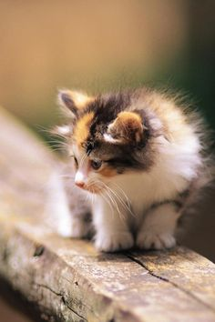 A little kitten out in the big world..