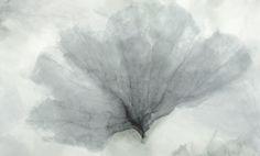 fancoral-aquamarine