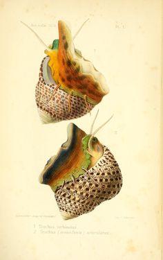 v. 1 (1870-84) - Annales de malacologie. - Biodiversity Heritage Library