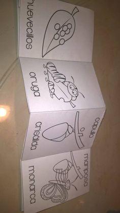 Graphing Activities, Preschool Worksheets, Preschool Activities, Spanish Immersion, Life Cycles, Homeschool, Science, Education, Charts