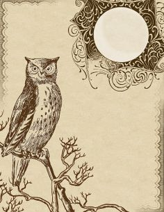 "8.5 x 11"" printable ~ featuring an owl perched on branches, with a bright moon above."