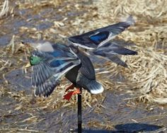 One Of The Best- Expedite Edge Rapid Flyer Lucky Duck Decoy! This duck decoy is one of the most realistic electronic landing duck decoy on the market.  It has everything necessary to trick even the most cautious ducks. Lightweight flexible wings and simple innovative drive system creates a realistic flapping motion. The material …