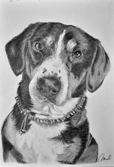 Hundeporträt Portraits, Dogs, Animals, Art, Draw, Photo Illustration, Art Background, Animales, Animaux