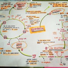 Mindmap for Biology: amazing study tool! Went through this is class last week...understood nothing.