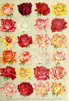 Antique Seed Catalog Reinvented: 1914 Miss Ella V. Baines Rose Clocks Tags – Wings of Whimsy