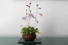 The Art of Bonsai - Four Seasons with the Kusamono of Carlos Hebeisen