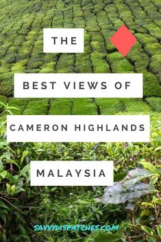 Where to Find the Best Views of the Cameron Highlands, Malaysia Malaysia Travel, Asia Travel, Cameron Highlands, Major Holidays, Bhutan, Mongolia, Nice View, Where To Go, Southeast Asia