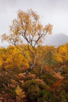 Zacht licht tijdens de regenbui verhult de berg in de achtergrond net genoeg - Canon EOS 5DmkII, 30mm (Canon 17-40 F4L), 1.160s op f.8, ISO 640