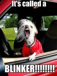 My pet peeve! Don't want no accidents, put your blinker on.
