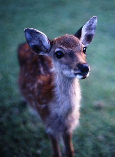 I want a Fawn so bad!!