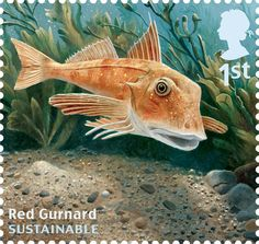 Royal Mail marks World Environment Day .  Red gurnard, Chelidonichthys cuculus, is widely distributed around the coasts of Britain.
