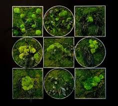 Resultado de imagen de jardines verticales con plantas preservadas