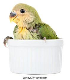 baby Love bird in ceramic cup Bird Food, Bird Cages, Cockatiel, Ceramic Cups, Love Birds, Baby Love, Parrot, Helpful Hints, Pets
