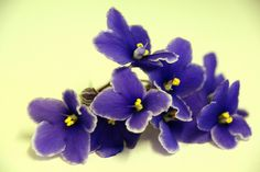 african violet tattoo - Google Search