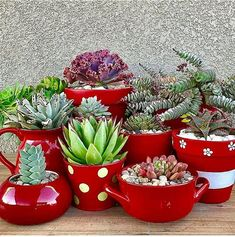 These beautiful succulent plants are great for those who are looking to dress up their home a bit. These 15 succulent displays are AMAZING! Succulents In Containers, Cacti And Succulents, Planting Succulents, Cactus Plants, Planting Flowers, Succulent Display, Painted Clay Pots, Decoration Plante, House Plants Decor