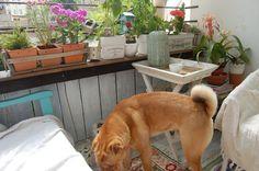 letní pohoda na terase