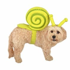 Halloween Snail Pet Rider Dog Costume - Green X-Large, Green Yellow Diy Dog Costumes, Dog Halloween Costumes, Halloween Fun, Trick Or Treat Bags, Medium Dogs, Large Dogs, Snail, Your Dog, Dinosaur Stuffed Animal