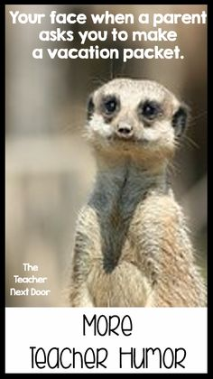 Find funny teacher observations and teacher humor on this post just for teachers.
