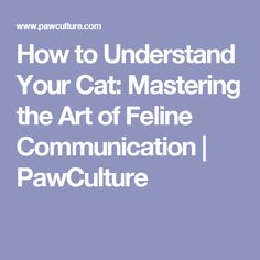 How to Understand Your Cat: Mastering the Art of Feline Communication | PawCulture