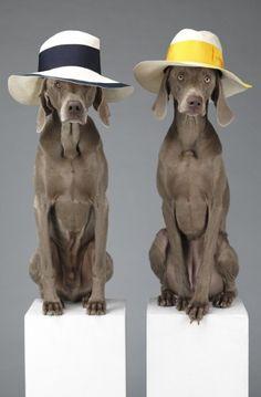 Acne and famous Italian hat company Borsalino - love the Weimaraner models