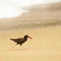 Corre... Corre... Corre... #photography #mendoza #chile #mar #sea #photo #fineart #javiergonzalez gonz.com.ar