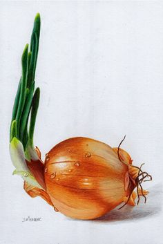 "Daily Paintworks - ""Onion with droplets"" - Original Fine Art for Sale - © Dietrich Moravec, colored pencil on paper. Colored Pencil Artwork, Coloured Pencils, Color Pencil Art, Still Life Drawing, Still Life Art, Botanical Illustration, Botanical Prints, Watercolor Fruit, Realistic Paintings"