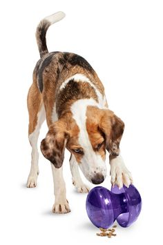 Some of the best dog toys