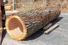 Black Walnut Tree Wood Value - Best Photo Tree Timber Logs, Walnut Timber, Wood Logs, Fire Wood, Wood Kiln, Kiln Dried Wood, Wood Slab, Chainsaw Mill Plans, Portable Saw Mill