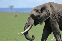 faune africaine 6_resultat