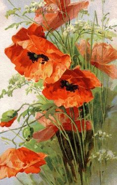 We are professional Catherine klein supplier and manufacturer in China.We can produce Catherine klein according to your requirements.More types of Catherine klein wanted,please contact us right now! Watercolor Flowers, Watercolor Paintings, Watercolors, Orange Poppy, China Painting, Arte Floral, Red Poppies, Poppies Art, Botanical Art