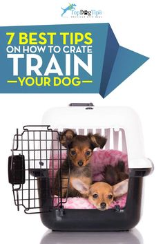 Tips for Crate Training Your Dog. Most professionals in the pet industry agree that crate training is an effective and humane method to use with any puppy or adult dog. Like most types of training, it's easiest to work with a puppy, but it's not impossible to crate train an adult dog. With patience, consistency and these tips for crate training your dog, you'll be on your way to success in no time! #dogs #dogtraining #dogcrates