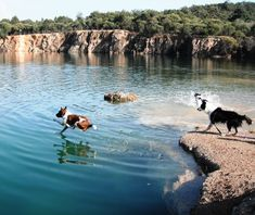 Top Dog Walks & Parks around Brisbane   Australian Dog Lover