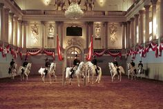 Spanish Riding School in Vienna and the Lipizzan horses.