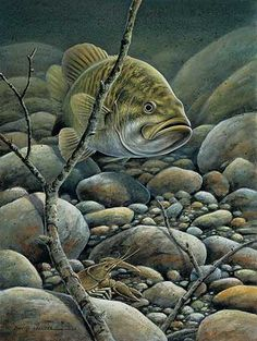 Shop for fishing art from Wild Wings! Our over 100 pieces of fish art reminisce fishing trips or depict different species of fish in their natural habitat. Fishing 101, Gone Fishing, Trout Fishing, Bass Fishing, Wildlife Paintings, Wildlife Art, Fish Paintings, Pesca Spinning, Fish Artwork