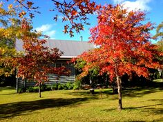 Stanthorpe accommodation beauty. Make a note to travel to the region at this incredible time of year. Find this cute cottage a www.diamondvalecottages.com.au #southernqueenslandcountry #stanthorpe #travel # accommodation Pick Your Own Apples, Cute Cottage, Golden Leaves, Golden Oak, Sunshine Coast, How To Make Notes, Australia Travel, B & B, Cottages