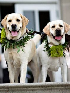 Wedding Dogs.  YES YES YES.  this is my life.