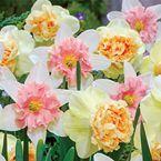 Daffodils - Daffodil Bulbs for Sale Daffodil Bulbs, Tulip Bulbs, Daffodil Flower, Bulb Flowers, My Flower, Daffodils, Flower Power, Tulips, Spring Flowering Bulbs