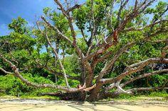 """POST NOVO! Já está no ar o primeiro post sobre Far North Queensland na Austrália.  Serão 3 posts de uma incrível road trip entre Daintree e Cape Tribulation.  Uma parte da Austrália pouco conhecida com praias paradisíacas cercadas por crocodilos e águas-vivas mortais. Florestas úmidas mirantes Patrimônios da Unesco e a Grande Barreira de Corais.  Acesse http://ift.tt/1ZbGH4z ou o link do nosso perfil e entre no clima """"Crocodilo Dundee"""" você também!  #daintree #daintreerainforest…"""